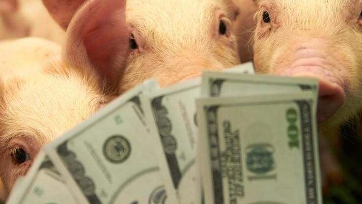 Coronakrisen viser landbrugets værd overfor banken
