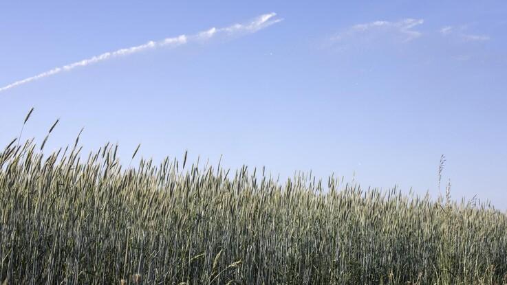 Jyske Markets: USDA udgiver sæsonens første WASDE