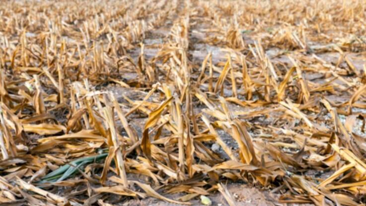 Tørke kan blive den næste