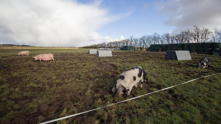 Øko-grisene fortsætter opad