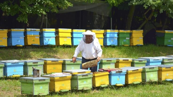 Oplev bierne på tæt hold
