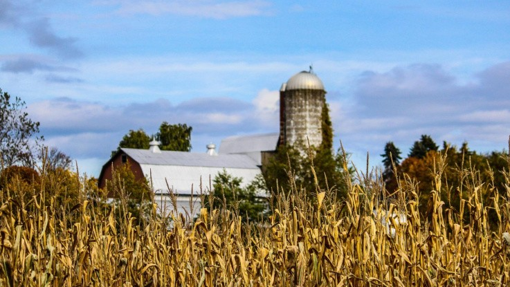 Amerikansk majs og sojabønner er ikke tilpasset klimaændringer
