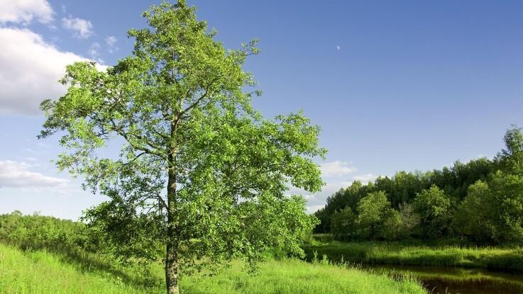 Minister er skeptisk overfor forslag om allemandseje af private skove
