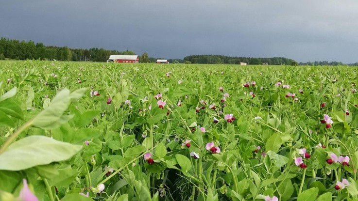 Nye muligheder for danske planteavlere