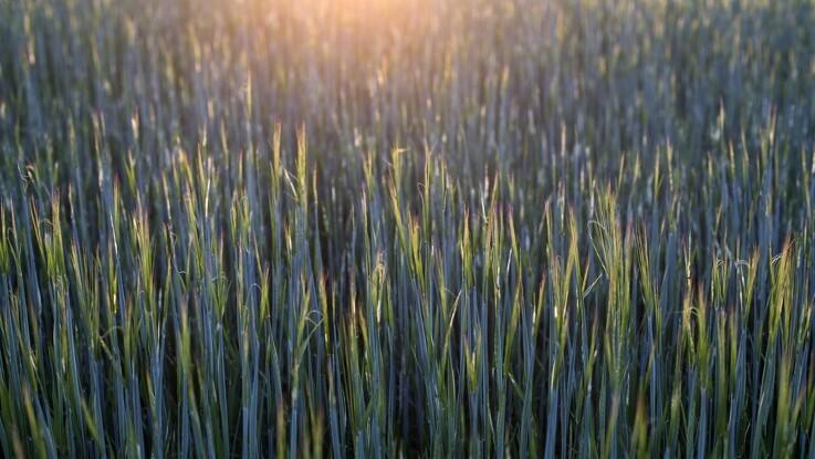 Global fødevareproduktion skal omlægges med ny teknologi