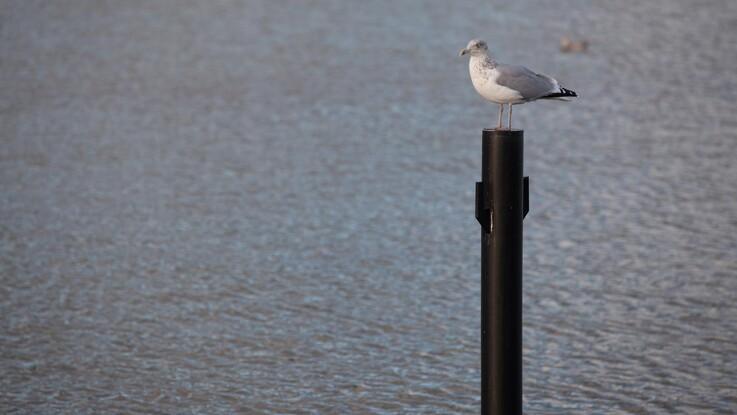 Spildevand i Øresund kædes sammen med dødszoner i havet