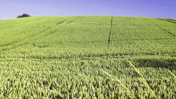 Nye ændringer til bekendtgørelser om planter og frø