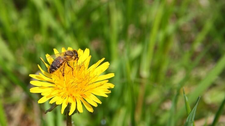 Biavlere presses af billig udenlandsk honning