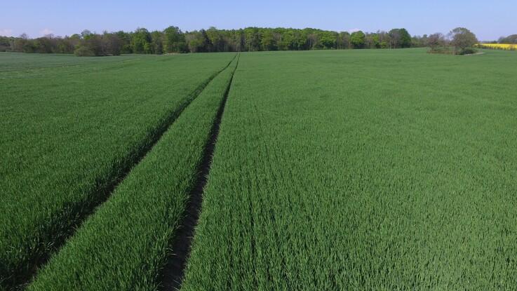 Ny fond med 250 millioner kroner øremærket til bioøkonomien