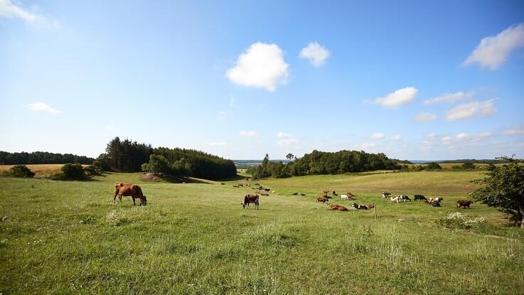 Nu kan landmænd få samlet markerne gratis