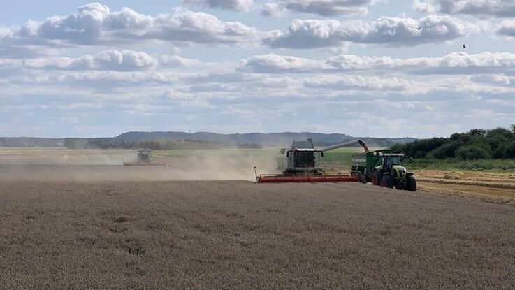 Gode høstudbytter på Djursland