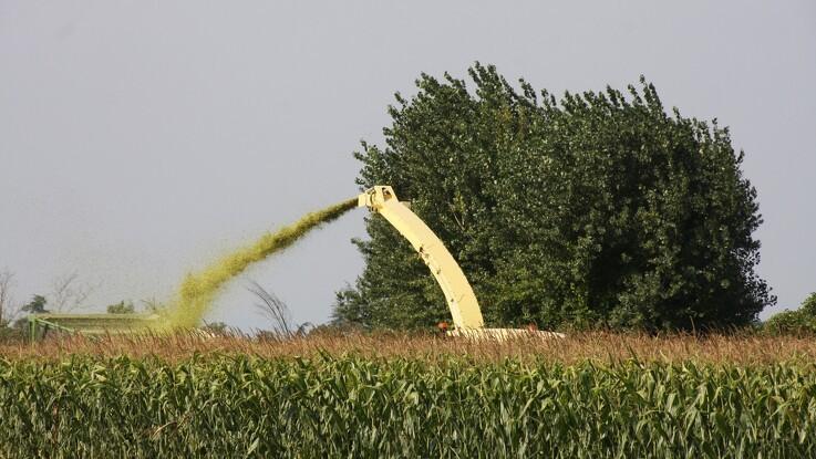 Informa opjusterer amerikanske majs- og sojaudbytter