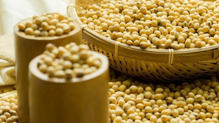Jyske Markets: Argentina satser på eksport af sojaskrå til Kina i 2020
