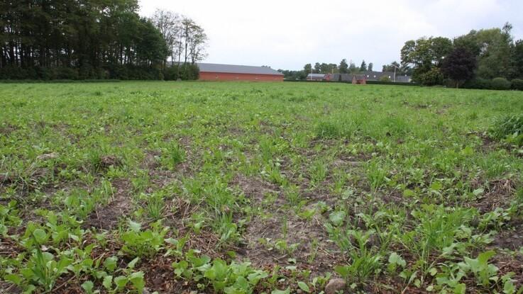 Endnu fem plantebeskyttelsesmidler skal udfases