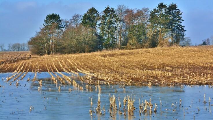 Forsker i oversvømmede afgrøder