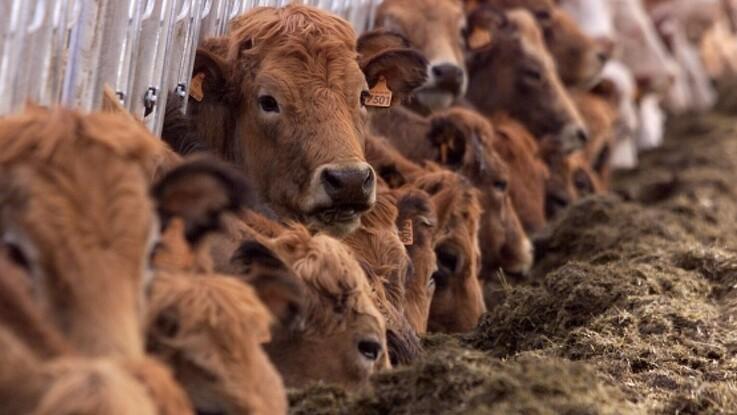 Robuste landbrug bliver fremtidens vindere