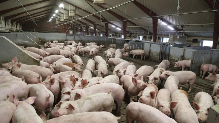 Færre love om dyrevelfærd