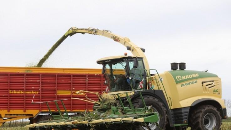 Over 1.000 heste klarer majsen hos Skamstrup
