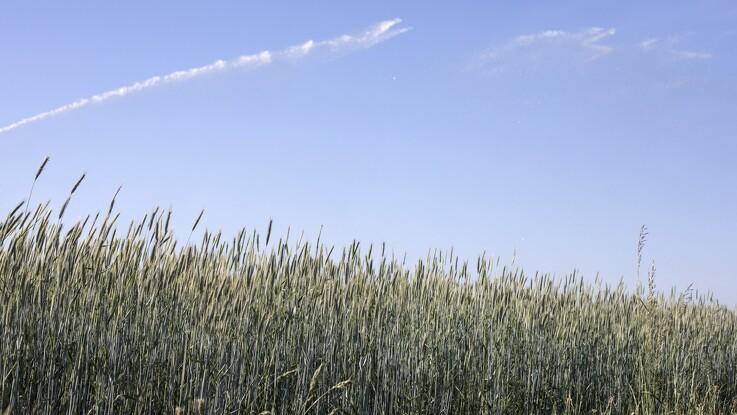 Familielandbruget: FN's Verdensmål skal være hverdagsmål