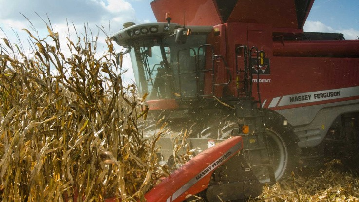 Russisk vårhvede fører til opjustering af produktionen