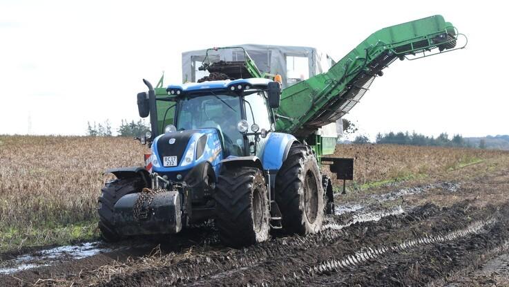 Bælteløsning til grøn kartoffeloptager