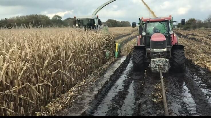 Ravnsgård mangler 20 procent af majsen