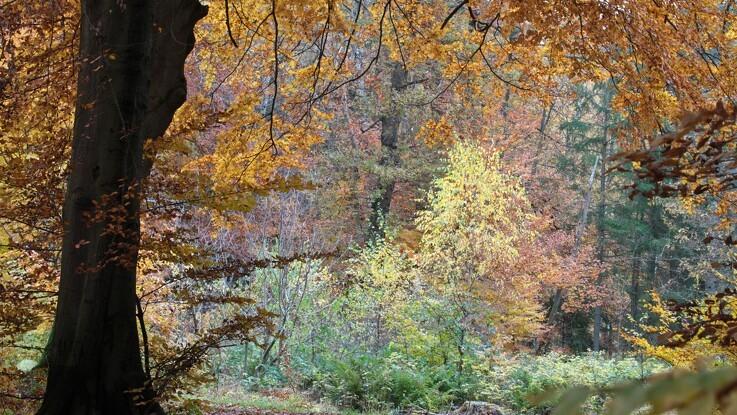 SF vil opkøbe landbrugsjord og plante skov