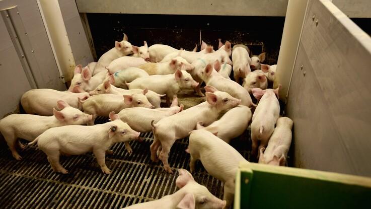 Dyrlægeforening er bekymret for dyrevelfærd