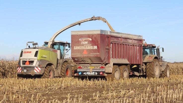 Sjællandsk maskinstation kan nu se enden på majsen
