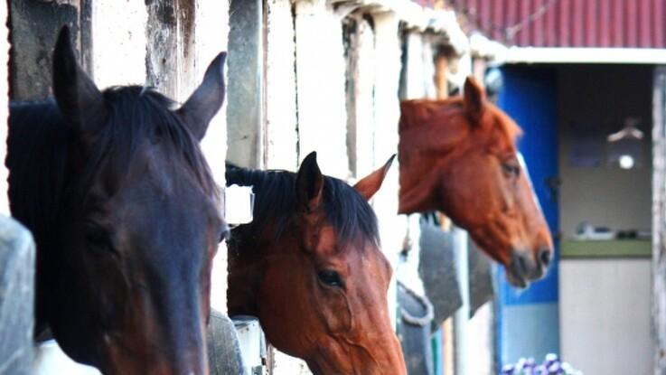 Ekspert: Derfor falder hestestutterierne i skattefælden