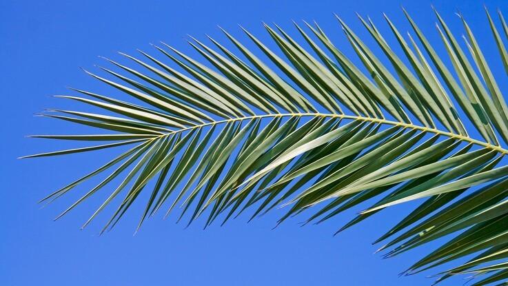 Jyske Markets: Palmeolien tenderer højeste niveau I 19 måneder