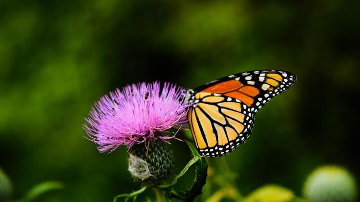 DN ønsker biodiversitetslov og 30 procent natur i 2030