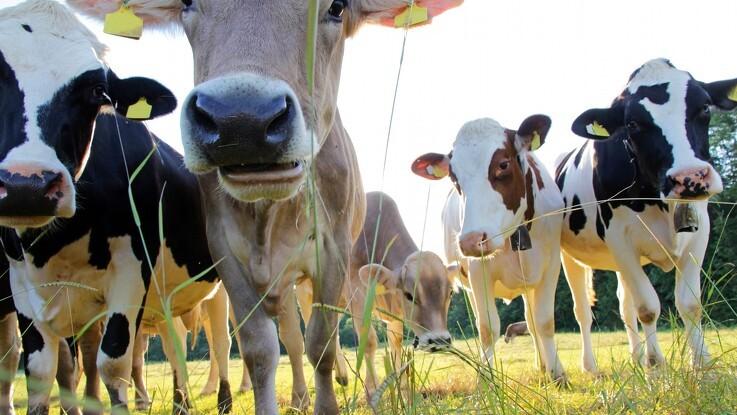 Nyt klimadatasæt skal hjælpe landmænd med at reducere CO2e aftryk i mælkeproduktion