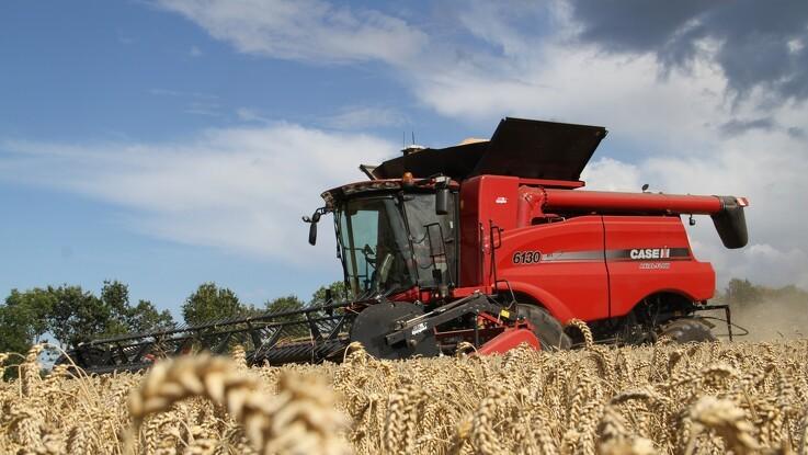 Fransk hvede presses på konkurrenceevnen