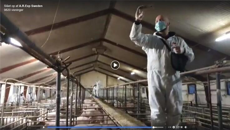 20 aktivister trængte ind i grisestald