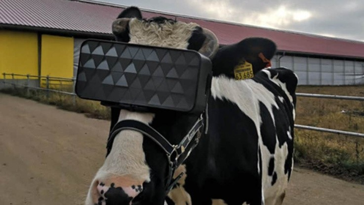 Tag fusen på koen og få den til at yde mere