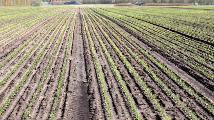 Færreste pesticidrester i dansk frugt og grønt
