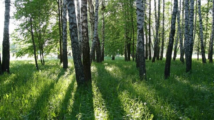 20 millioner kroner hvert år til mere urørt skov