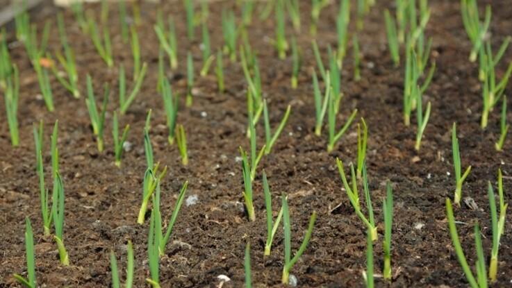 Nye EU-regler for indførsel af planter