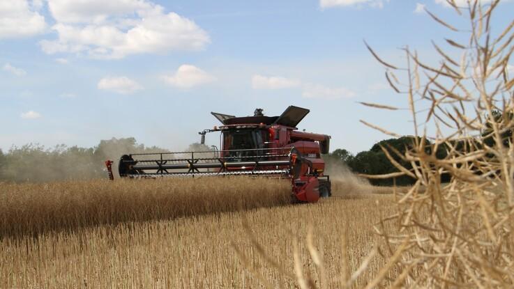 Jyske Markets: Sigma Conseil ser laveste franske hvedearealer i 18 år