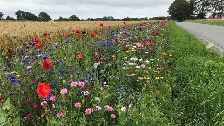 Sig det med blomster: Bierne og din nabo vil elske det