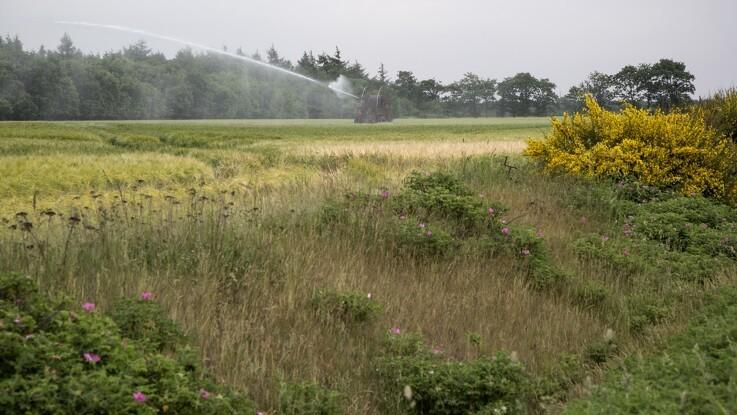Landbrugsarealer på størrelse med Hjørring kan blive til vild natur