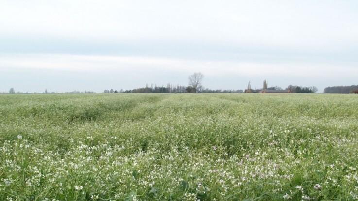 Ti landmænd søges til projekt om biomasse og efterafgrøder