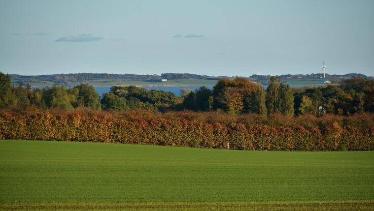 Mere lys og vand skal sikre større biodiversitet i Danmarks skove