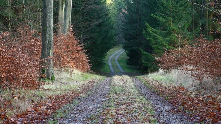 Flere bruger skovene til at få luft fra Covid-19