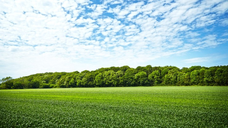 45 millioner kroner til ny skov
