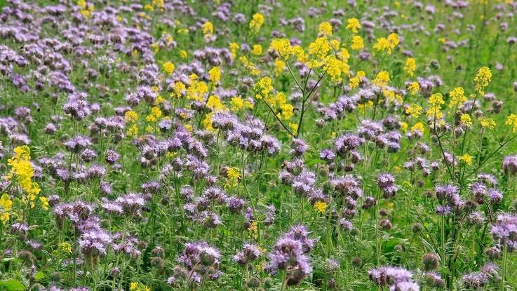 Blomsterflor på markerne