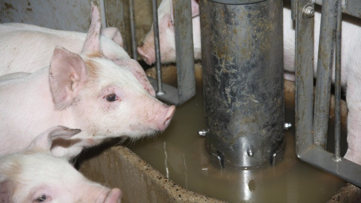 Seges håber på gentagelse af kongres om svinefodring