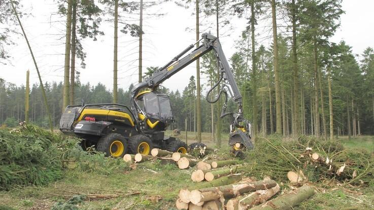 EU vil intensivere beskyttelse af skove