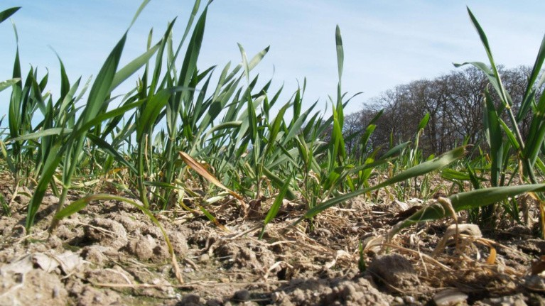 Tjek vintersæden og få lagt forårets plan for gødskning og behandlinger